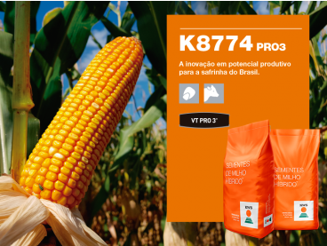 Maíz KWS K8774 PRO3